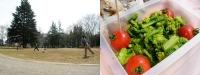 公園と菜の花弁当と音楽.jpg