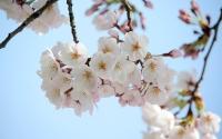 090403お花見02.jpg