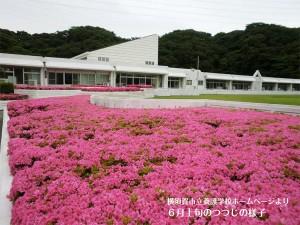 横須賀市立養護学校・6月上旬のつつじの様子