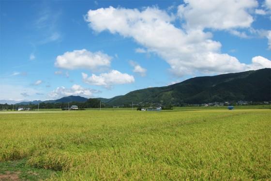 29_稲穂と山と雲