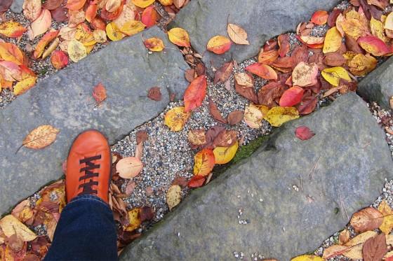 27_小さい秋みつけた