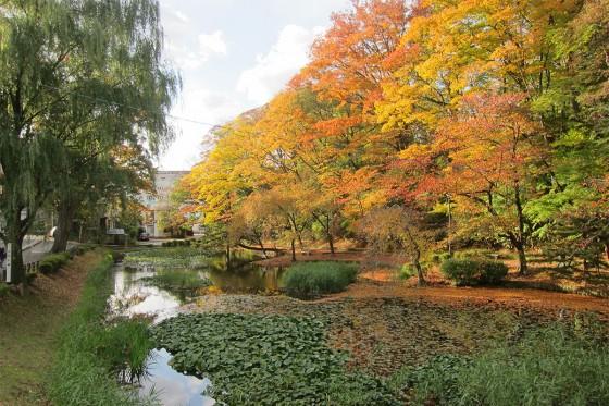 17_千秋公園の紅葉が見頃