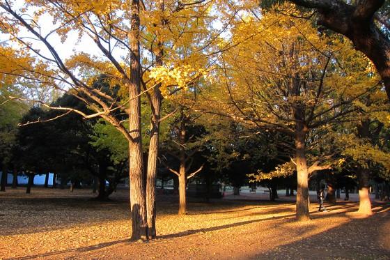 28_代々木公園の素晴らしい紅葉が