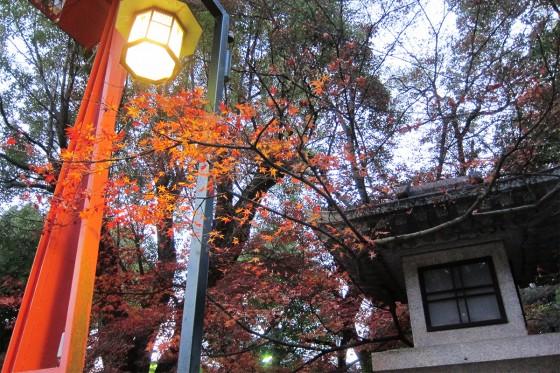 29_残り紅葉も美しい