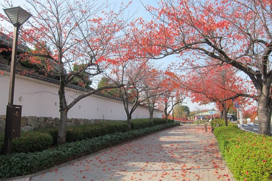 29_紅葉が綺麗