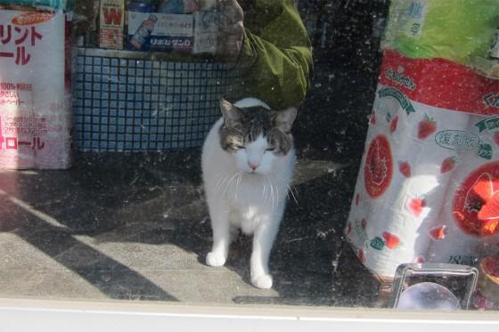 11_豊川稲荷にお礼のお参り09お店の中のネコ(開店前)