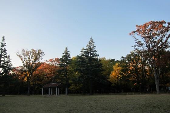 31_秋の日はつるべ落とし