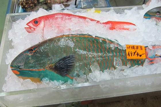 47_沖縄らしいお魚