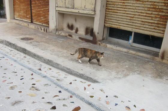 44_沖縄らしいネコ