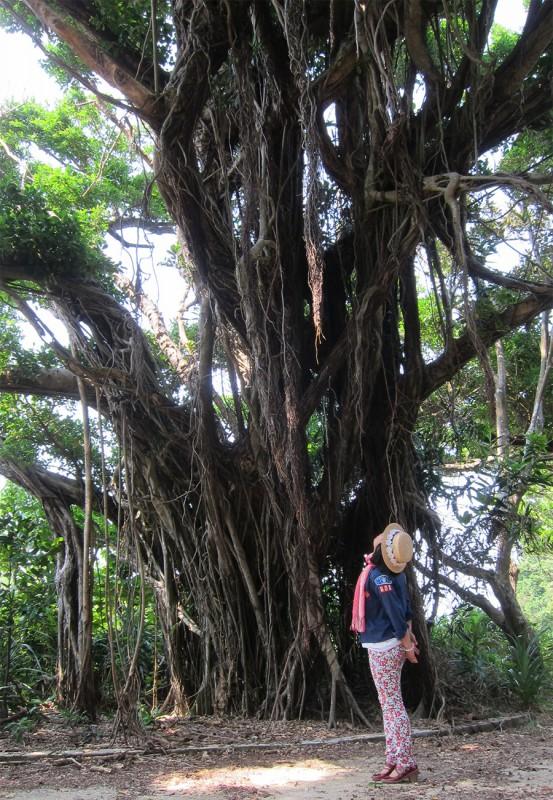 41_ガジュマルの木