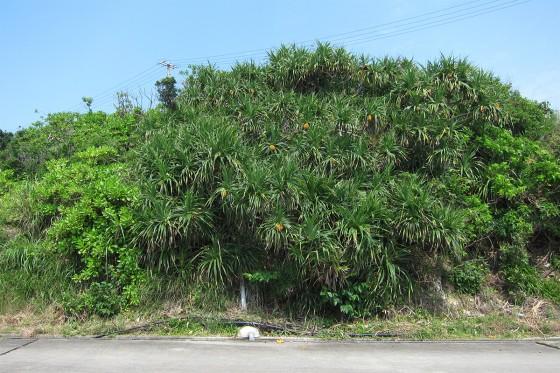 23_南国らしい木