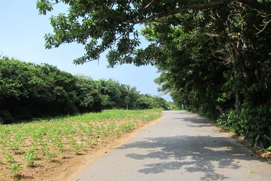 28_畑と木陰とサイクリング