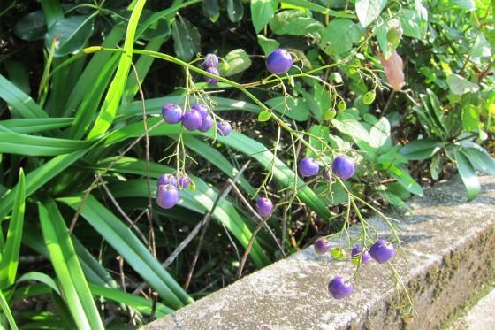 56_紫の実