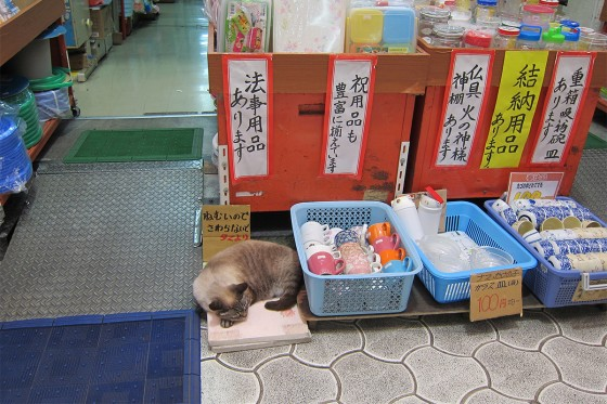46_沖縄らしい商店街