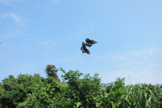 34_蝶は飛んでいきます
