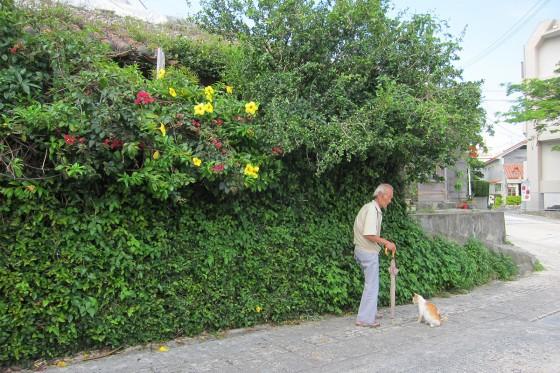 36_沖縄のおじいさんとネコ