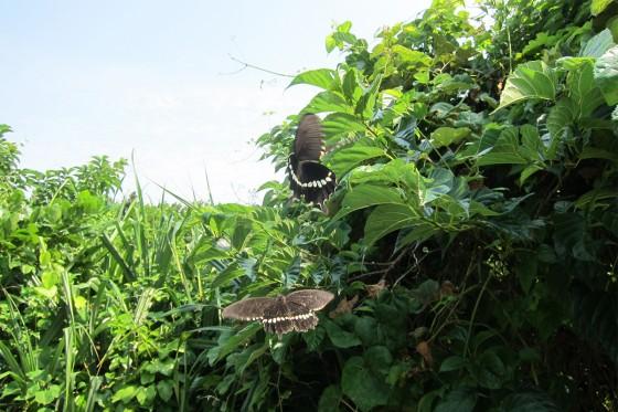 33_蝶は踊ります