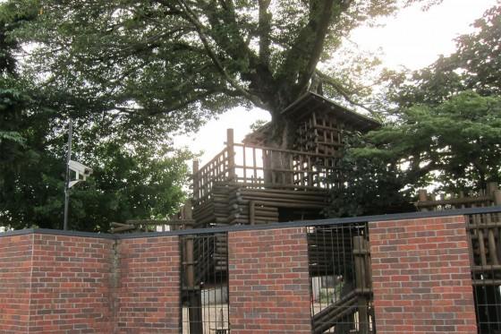 81_若竹の園