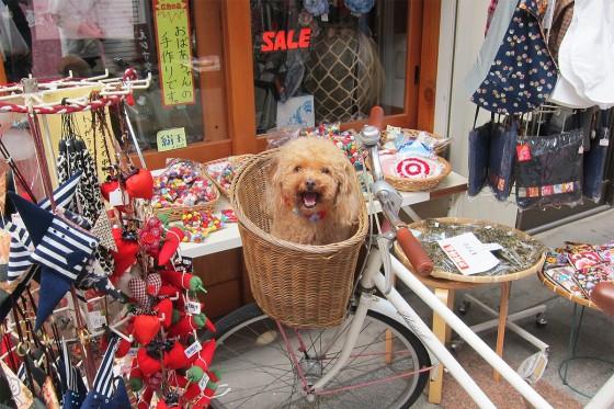 12_カワイイ犬