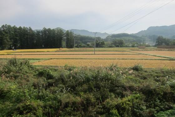 05_稲刈りも始まっています