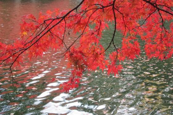 39_キレイすぎる雲場池の紅葉
