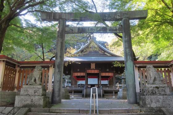 38_金崎宮の本殿