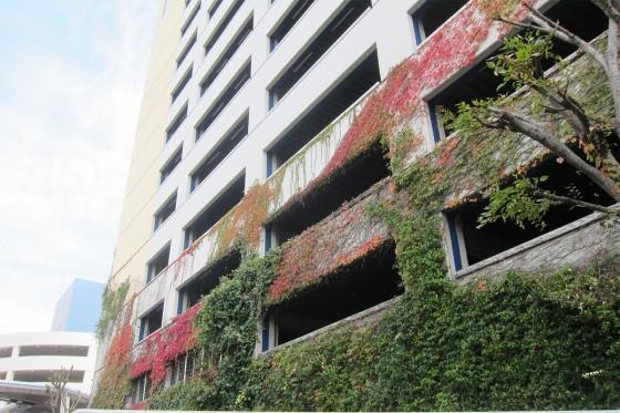 11_ビルの蔦も紅葉
