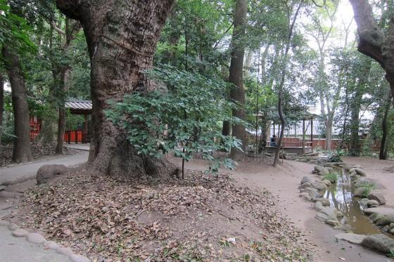 20_生田神社の奥の林