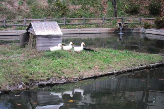 23_ながた荘のアヒル池