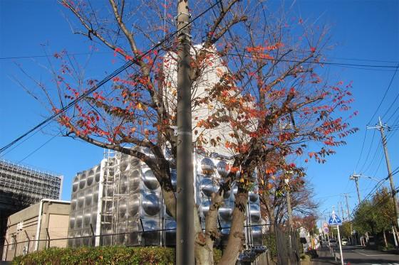 02_青空と紅葉