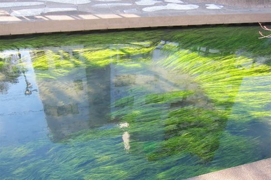 10_水も綺麗