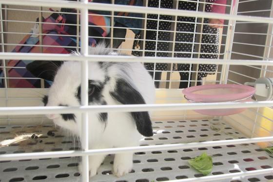 12_ウサギさんもバイバイ