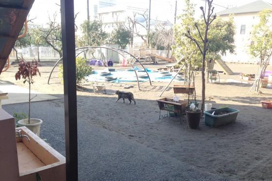 14_園庭にネコが