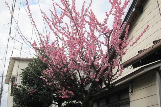 04_桃の季節