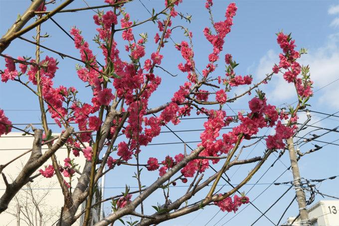 2015_0322_春を見つけた散歩道19