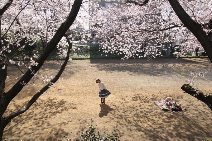 鷺沼お花見ピクニック2015-16