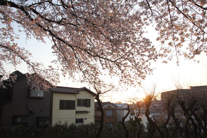 鷺沼お花見ピクニック2015-31