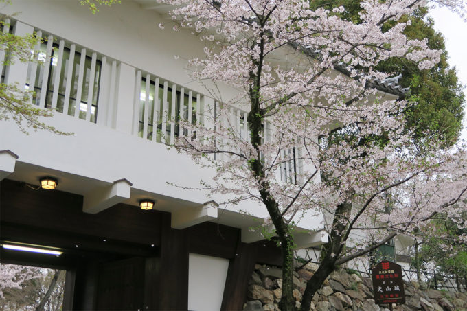 38_桜舞い散る国宝犬山城