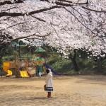 鷺沼お花見ピクニック2015-03