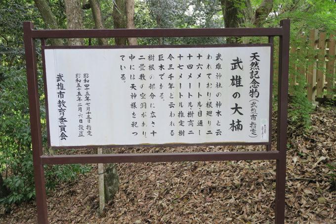 50_天然記念物・武雄の大楠は推定樹齢3000年