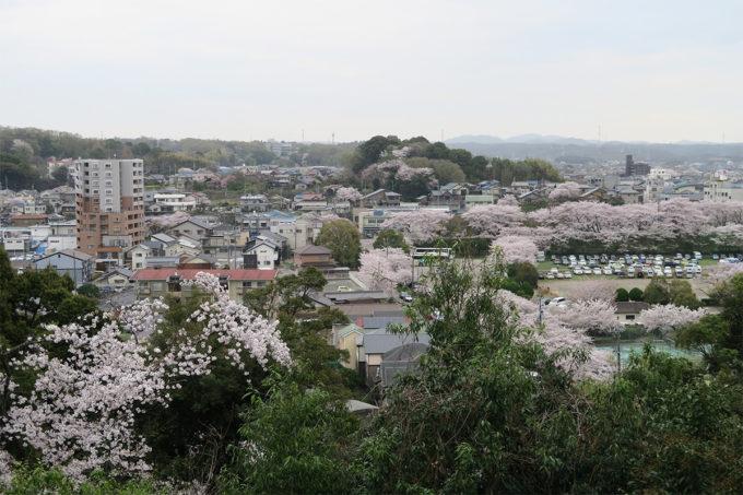 40_犬山の街なみと桜