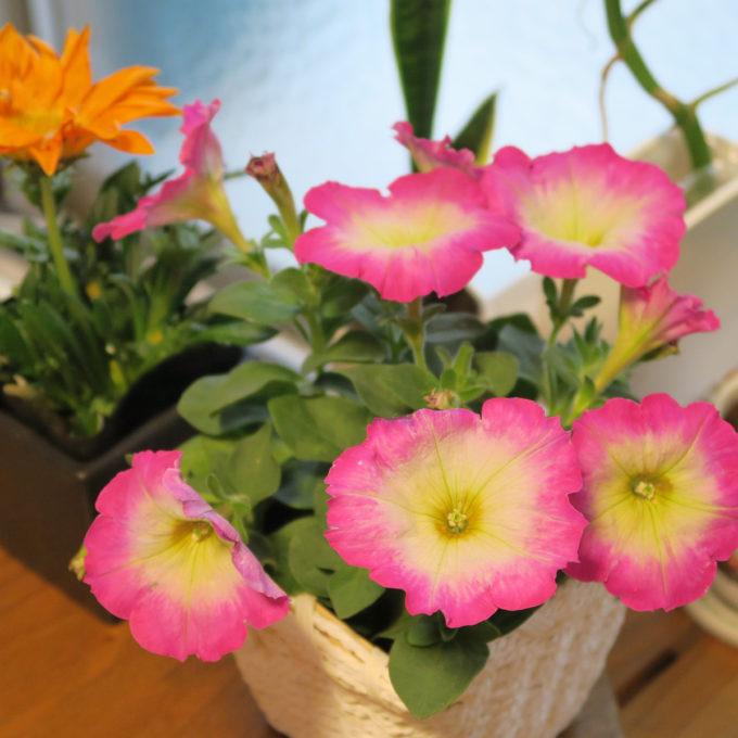 27_頂いたお花