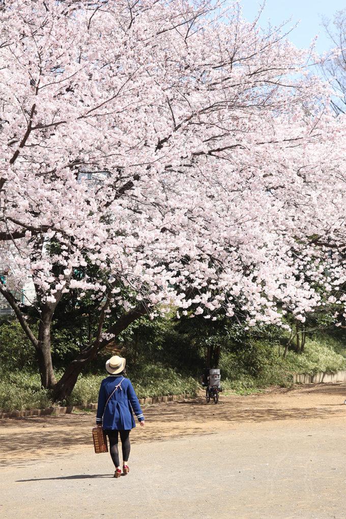 鷺沼お花見ピクニック20150331-15