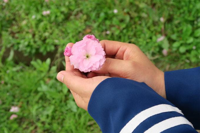02_八重桜