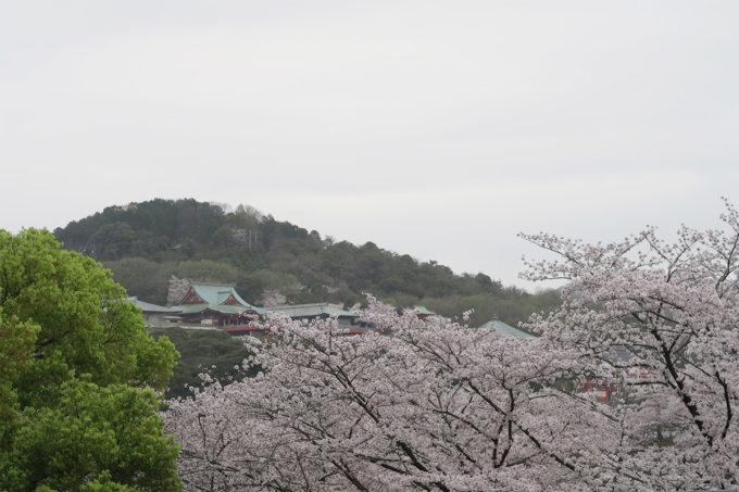 47_大本山成田山名古屋別院大聖寺と桜