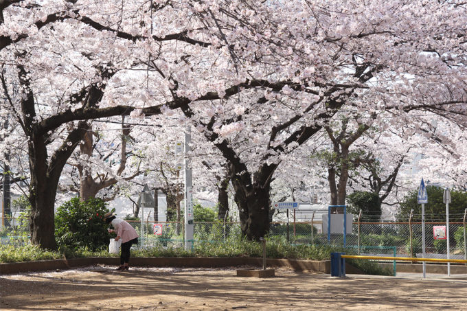 鷺沼お花見ピクニック20150331-23