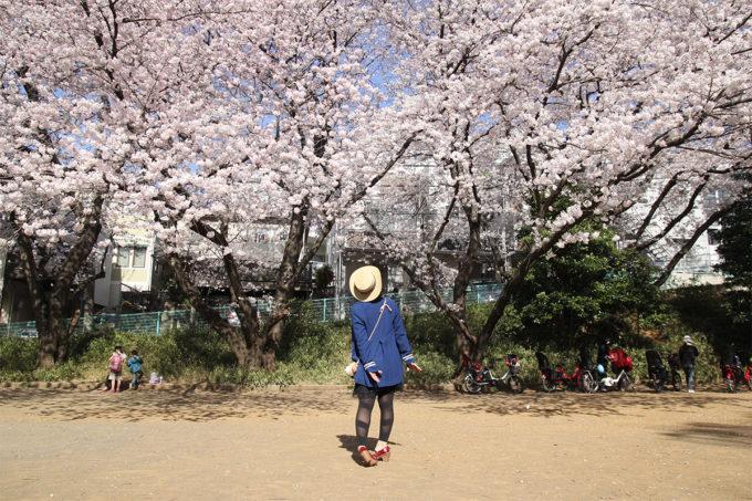 鷺沼お花見ピクニック20150331-27
