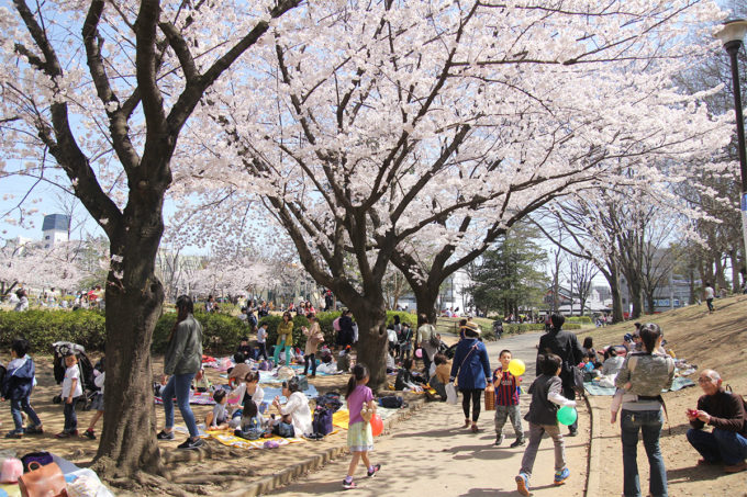 鷺沼お花見ピクニック20150331-02