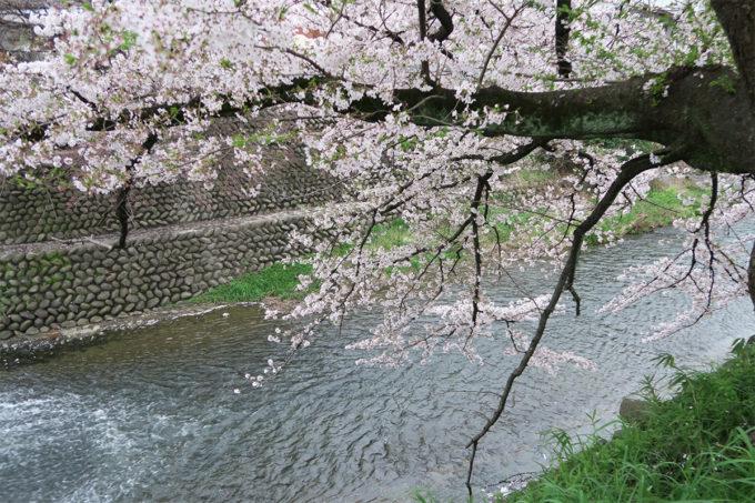 43_桜と川の遊歩道