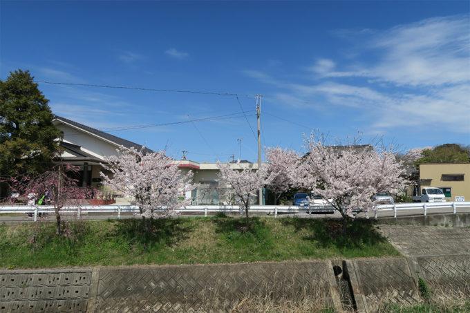 09_桜も満開に